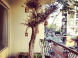 Olive Tree Thrives on Beirut Balcony